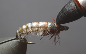 Dubbing Brush Nymph